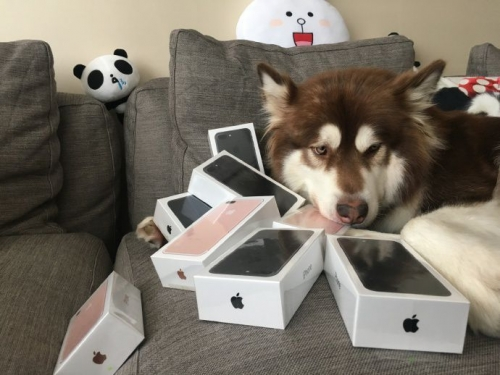 Apple fanboy spends fortune on iPhone 7s for dog