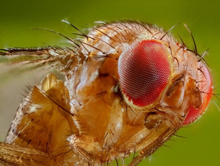 Mac malware 'FruitFly' caught silently spying on computer users