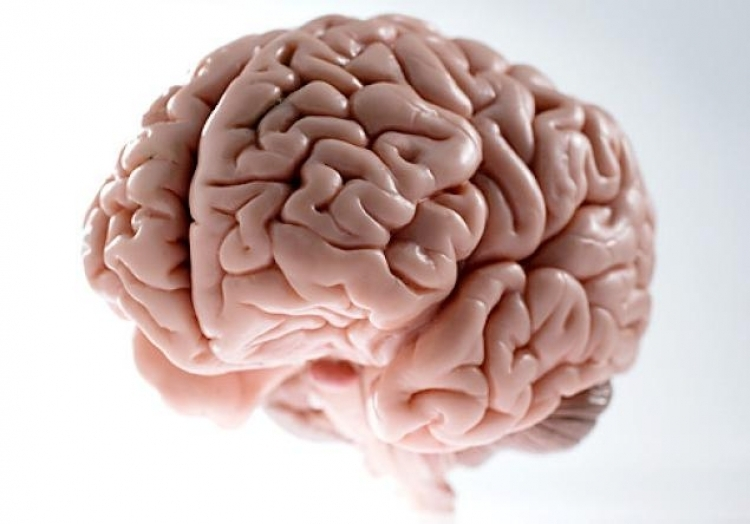 Elon Musk launches company to merge human brains with computers