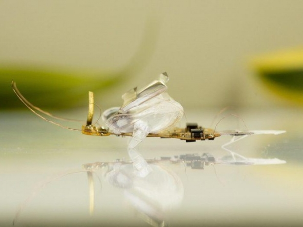 Swiss boffins make robotic terminator bugs