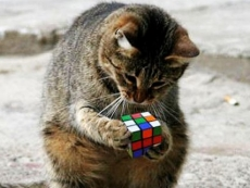 AI defeats Rubik's cube without human help