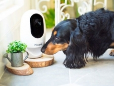 Pets set to connect to the internet